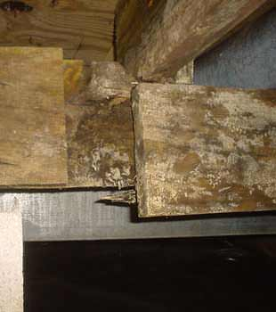 Extensive basement rot found in Savannah by Lowcountry Foundation Repair