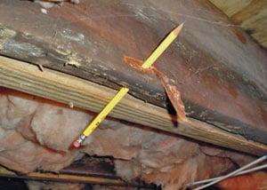 Destroyed crawl space structural wood in Johns Island