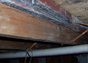 Rotting, decaying wood from mold damage in Brunswick